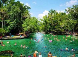 guests swimming at Wekiwa springs during swim picnic on original orlando tours