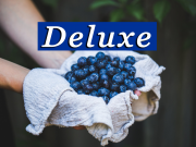deluxe blueberries fresh off the bush can be picked at the blueberry hill fields during an original orlando tours visit