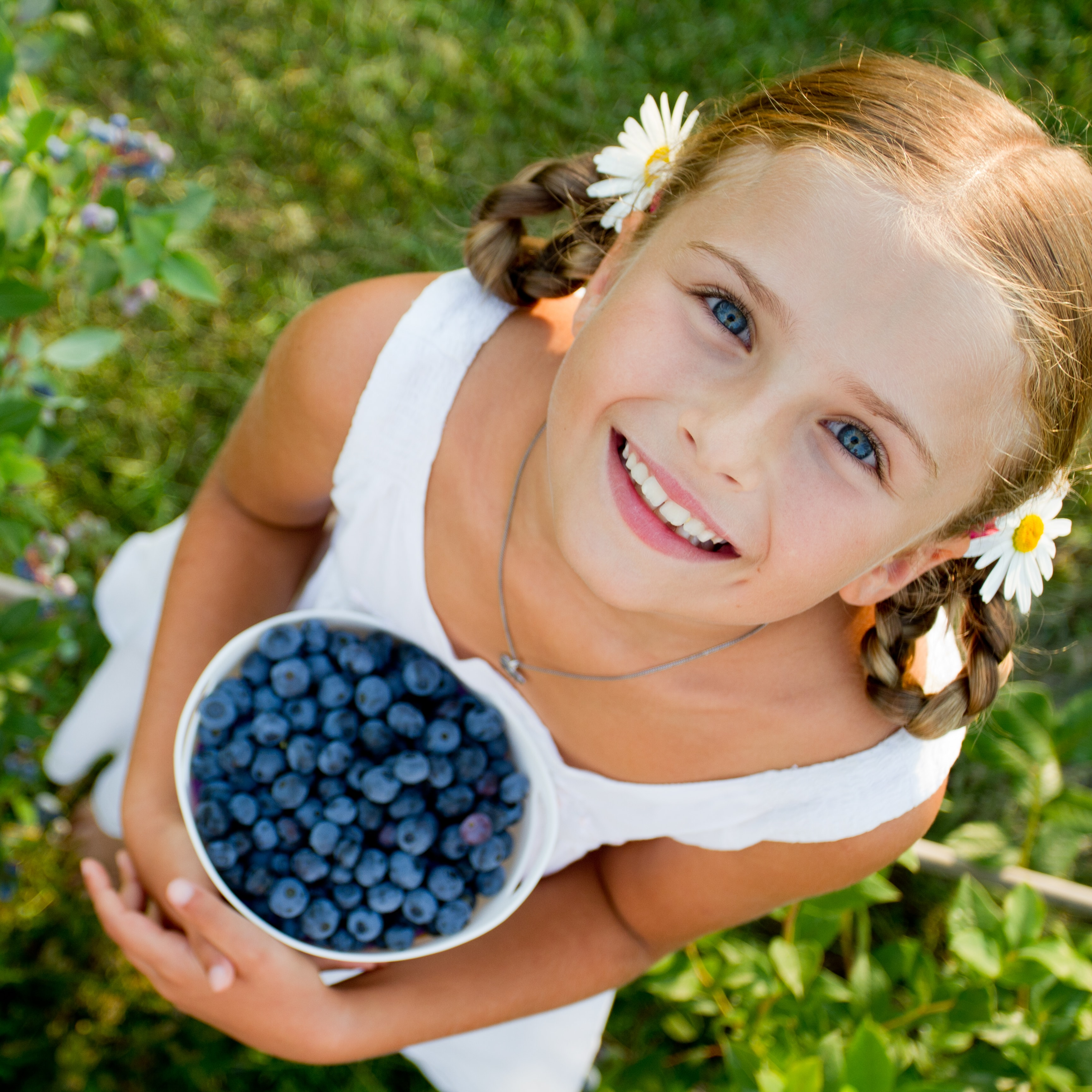 u-pick blueberries fresh off the bush can be picked at the blueberryhill fields during an original orlando tours visit
