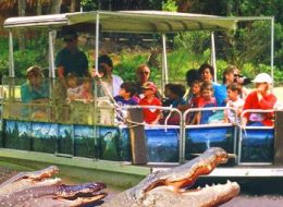 our guests go outside the tourist zone to see wild gators on the green river boat tour at Jungle adventures during an original orlando tours visit to historic christmas florida