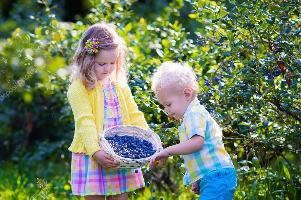 kids picking blueberries fresh off the bush can be picked at the blueberry hill fields during an original orlando tours visit