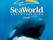 seaworld orlando logo with shamu custom tour