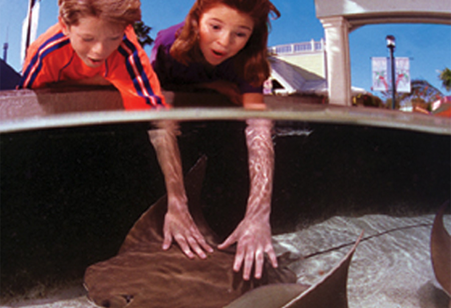 kids touching sting rays at seaworld orlando while with a vip private guide during an original orlando tour